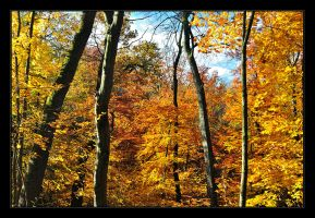 the end of autumn is near no.3 by Hartmut-Lerch