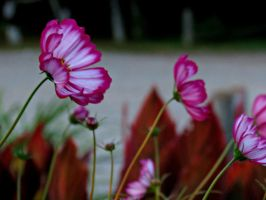 Flowers After Sunset... by Michies-Photographyy