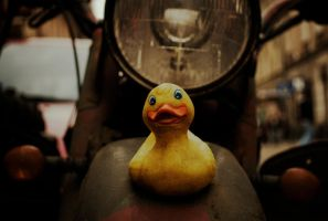 Ducky by z-zither