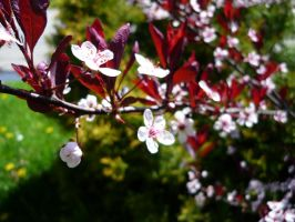 little white and red flowers by Shadow-Adawa