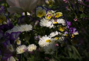 Pure Delight by K-Boyd-Photography