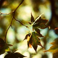 3rd autumn. by indiae