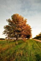 .: Bosbury Autumn :. by DavidCraigEllis
