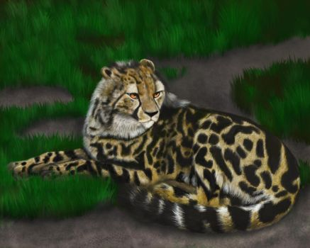 Jama, the King Cheetah by Dragonflm61