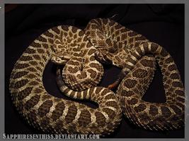 Rattlers by Sapphiresenthiss