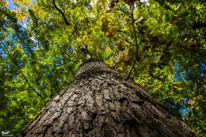 Oak (close up) by B-O-K-E