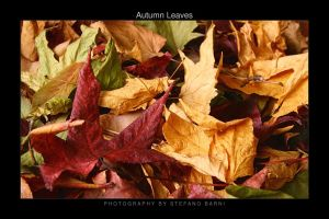 Autumn leaves by barninga
