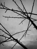 Branches by wentzxxpete