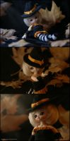 This is Halloween by MySweetQueen-Dolls