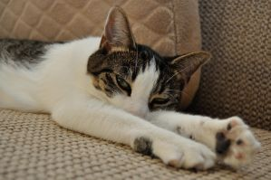 Resting Paws by TWOphotography
