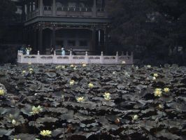 Old Lotus Pond - Baoding by yumewosagashite