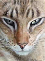 ACEO Oriental Tabby Cat by sschukina