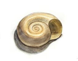 Shell 1 by CathyStephens