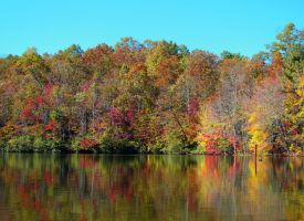 Reflections of Fall 1 by bethabus