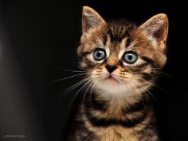 Surprised by KonikPolski