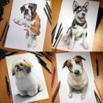 Dog pencil portraits by AtomiccircuS