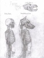 Wolf Anthro Upper Body Study by RussellTuller