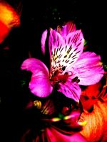 Efflorescence by mihi2008