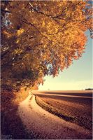 golden october 4 by FreaXXaerF