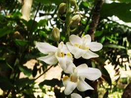 Tropical orchid 6 by WolfyKaia