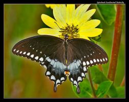Spicebrush Butterfly 07-1 by boron