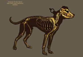 Dog Skeleton by Tikall