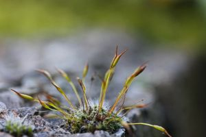 mini moss forest by clochartist-photo