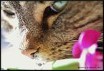 Cat and flower by Bonniemarie