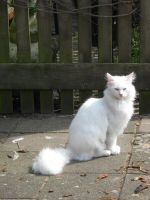 White Cat 2 by Electricstock