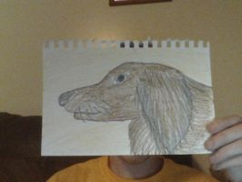Drawing of my Wiener :P by Champineography