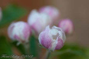 New Blooms by WinterLover29