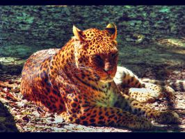 leopard by cortexedge