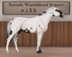 Nevada Warmblood 253 by BRls-love-is-MY-Live