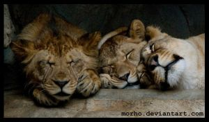 sleeping family by morho