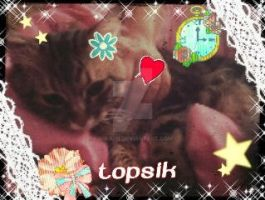 Collage with my cat :3 by Mika-19