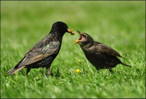 Yey! Mealworms! by Somebody-Somewhere