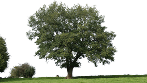 tree 19 png by gd08
