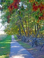 Fall Trees Fence 3 by vacuumslayer
