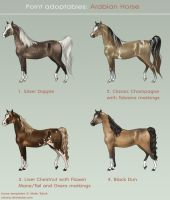 Auction: Arabian Horses CLOSED by cerona
