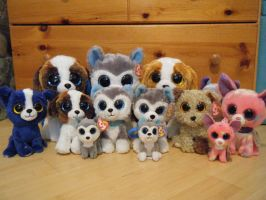 Ty Beanie Boo Dog Collection! by ShadoweonCollections