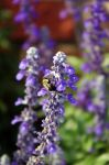 Bumble Bee 1 by LDFranklin