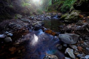 Purisima Creek IV by FeralWhippet