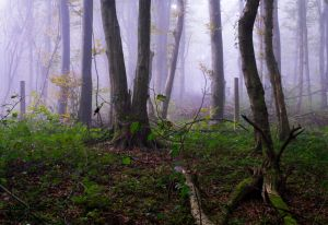 Forest 4 by LillianEvill