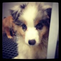 Puppy at Petland by Wigglesx