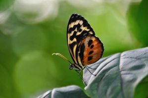 Perfect Butterfly by raelea