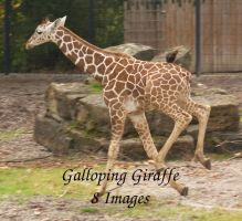 Galloping Giraffe Package by bookscorpion