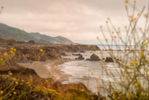 California Coast Foliage by Bawwomick