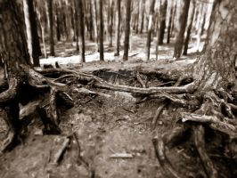 Black and White Woodland by 13cat-commander