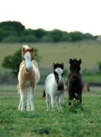 Tres Amigos by TheDayILiveFor