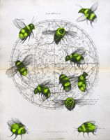 Celestial Bodies #5 - Bees by LouiseMcNaught